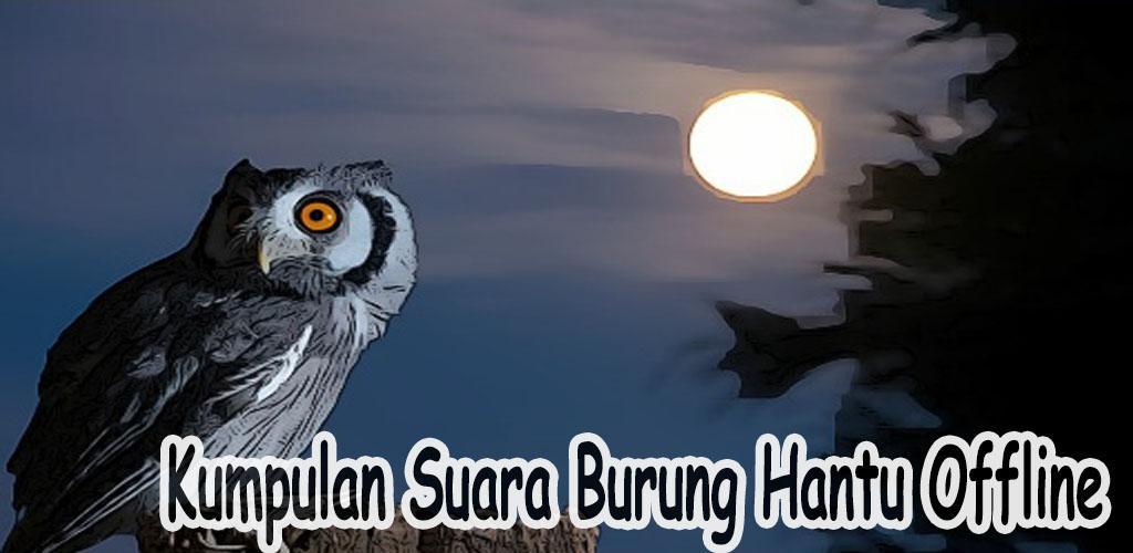 Kumpulan Suara Burung Hantu Offline 1 0 Apk Download Com Banyumiliapp Kumpulansuaraburunghantu Offline Apk Free