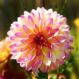 Pastel by Gérard CHATENET - Flowers Single Flower