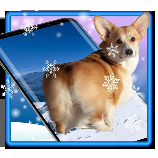 3D Rump Shaking Corgi Dog Theme&Live wallpaper