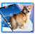 3D Rump Shaking Corgi Dog Theme&Live wallpaper file APK for Gaming PC/PS3/PS4 Smart TV