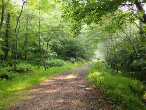 林道は更に奥へ
