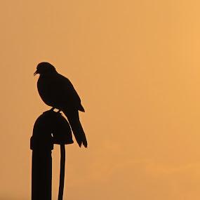 Solitude by Satabdi Datta - Animals Birds (  )