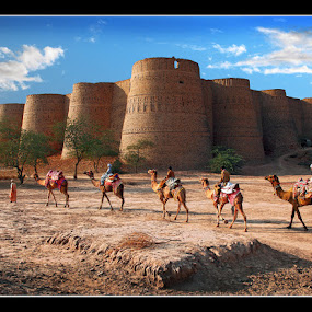 Return of the Caravan by Sami Ur Rahman - Buildings & Architecture Public & Historical ( choolistan desert, blue sky, bahawalpur, derawar fort, caravan of camels )