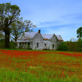 Goat Grass and Ghost House by Kevin Hill - Buildings & Architecture Decaying & Abandoned ( field, grasses, home, skyline, grass, house, abandoned,  )