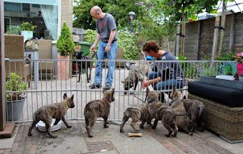 Photo: Spannend, die grote Hollandse Herders!