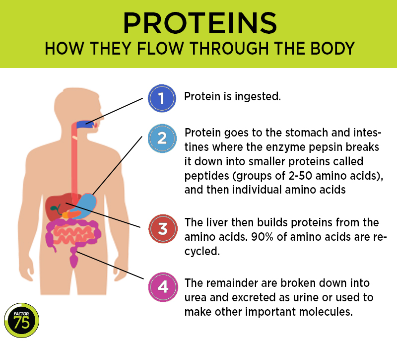 look at the protein below. what is its function