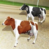 Crazy Cow Racing