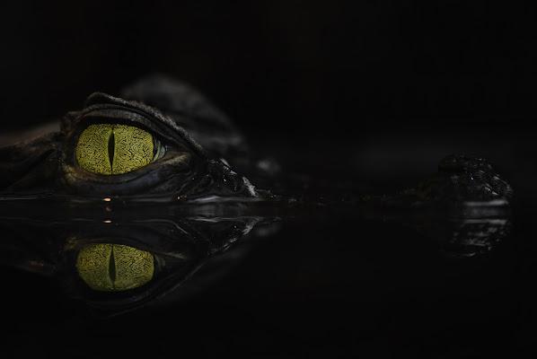 Occhi nella notte di Clara