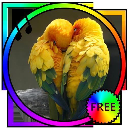 Bird Sounds Ringtones Free - App su Google Play