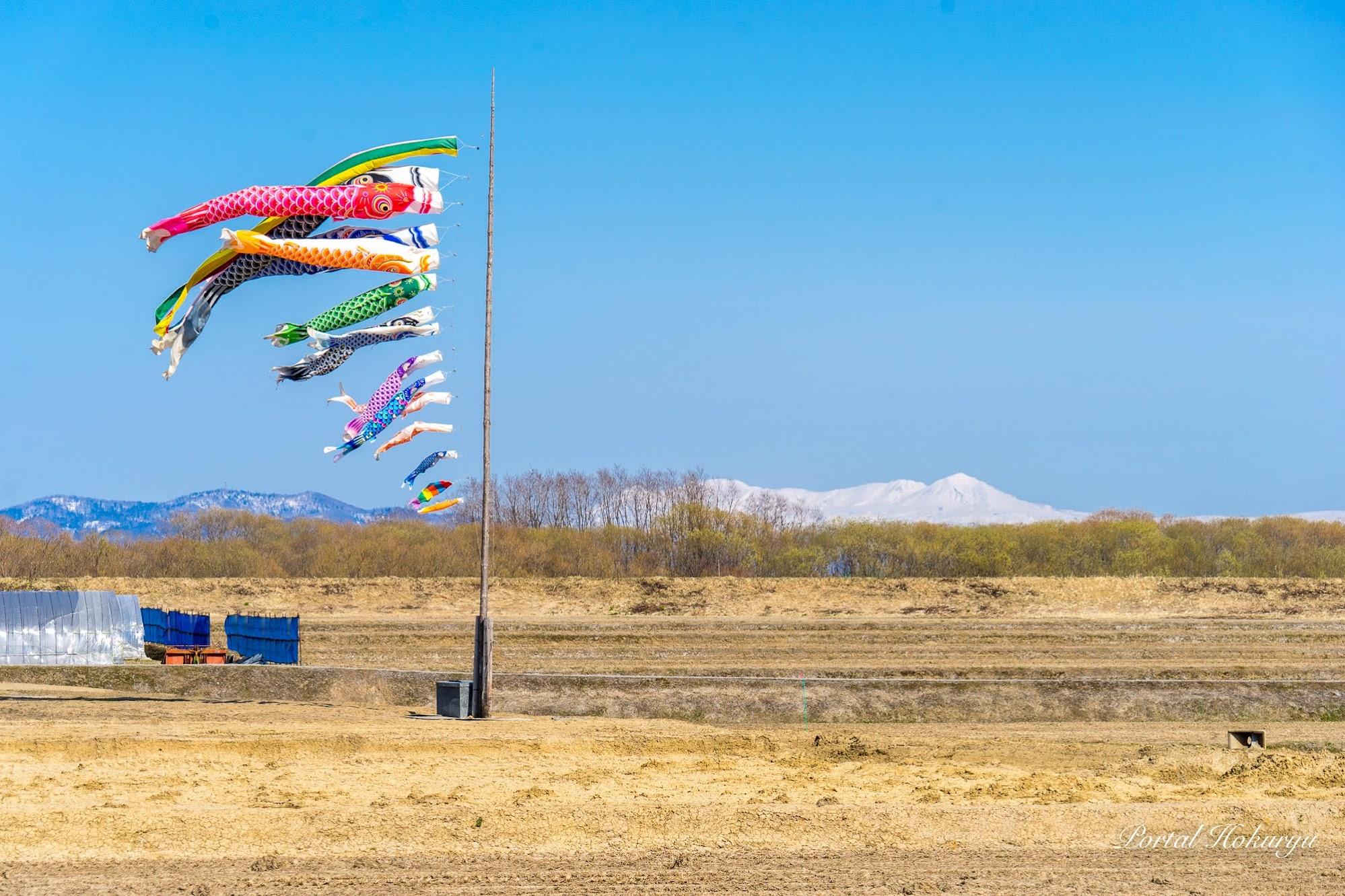 空を彩る素晴らしい鯉の家族たち