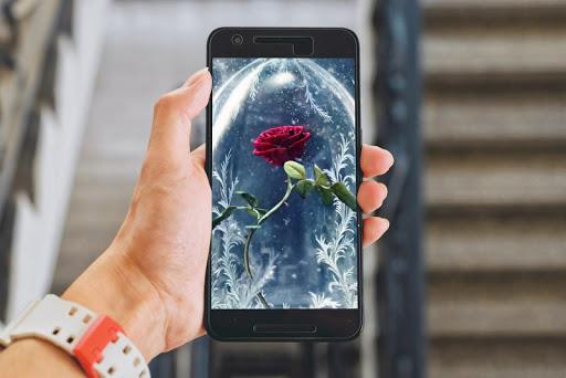 Best Rose Picture 4.0 screenshots 1