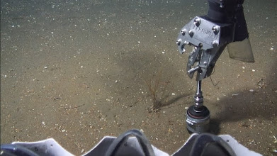 Photo: ROV collecting push core (Photo credit: Deepwater Canyons 2012 Expedition, NOAA-OER/BOEM)