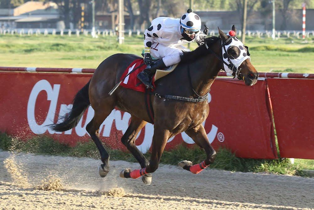 Lukaku (Cat Scan) se quedó con la victoria en Handicap (1100m-Arena-VSC).
