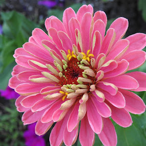 by Sherry Gardner - Flowers Single Flower (  )