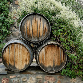 Wine Barrel by Gwen Paton - Food & Drink Alcohol & Drinks ( wine, barrel,  )