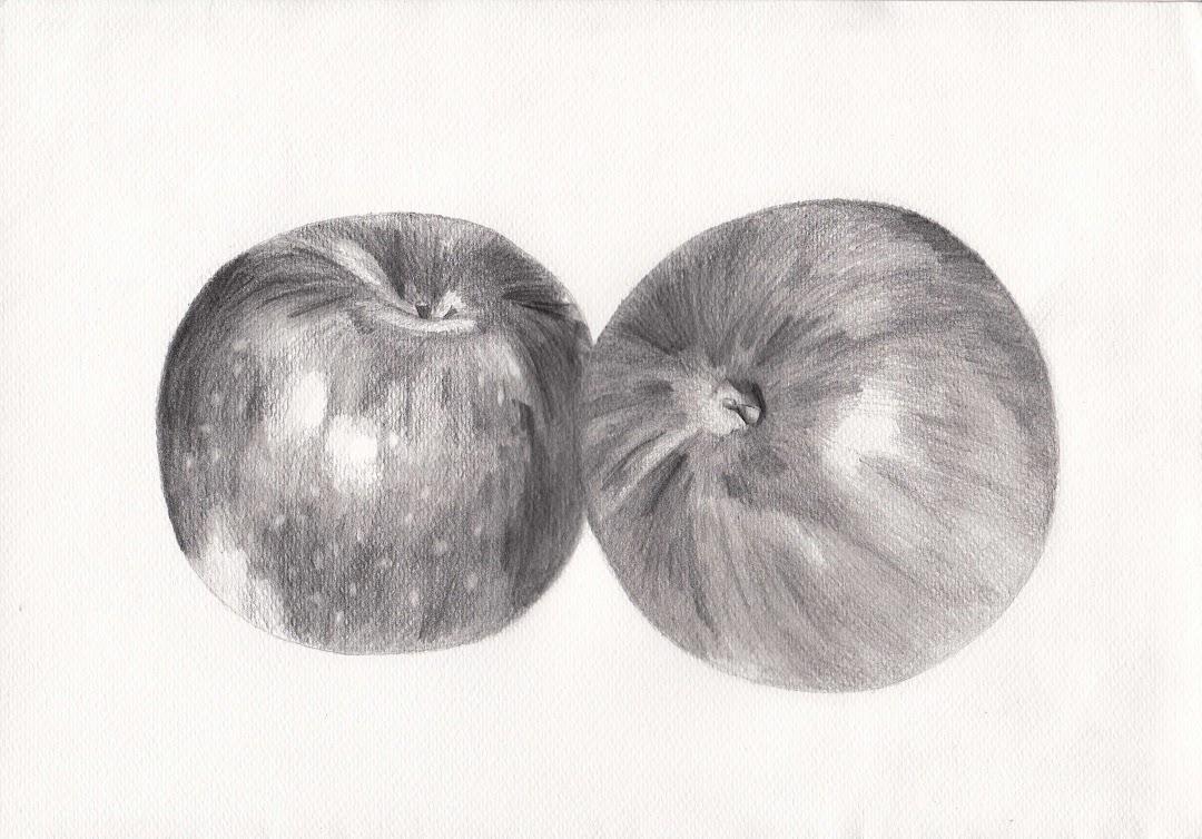 Arsiran Dan Tekniknya Menggambar Apel Dengan Pensil