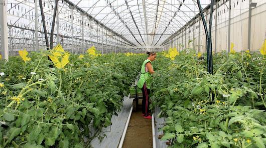 Bonita Bhandari: los ingleses no eliminarán hortalizas almerienses por el Brexit