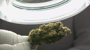 Marijuana Mayhem thumbnail