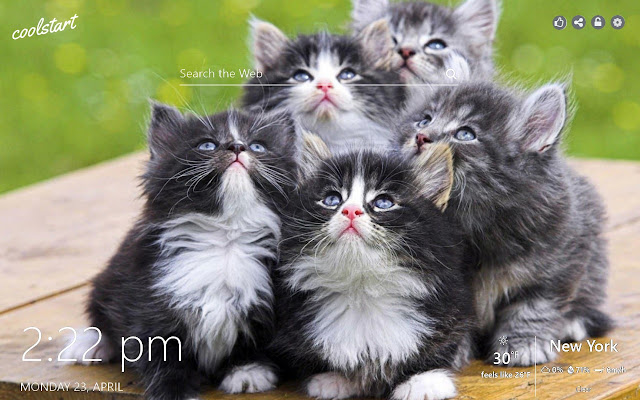 Cute and Funny KIttens HD Wallpapers Theme