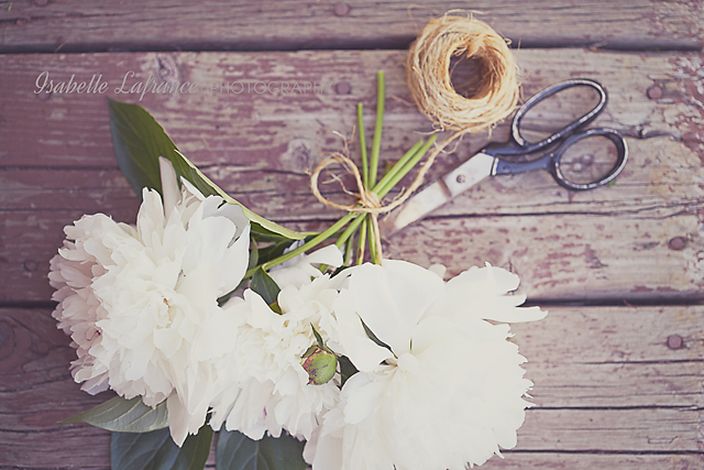 Photo: Eventually, all the pieces fall into place... #FloralFriday  by +Tamara Pruessner