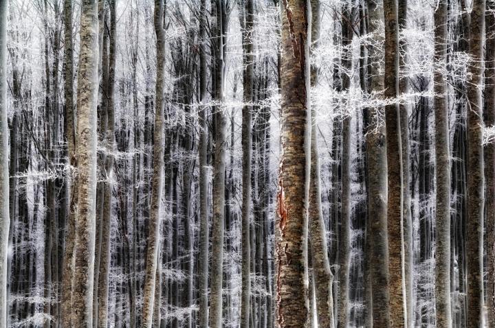 Neve Lieve di francescomartini