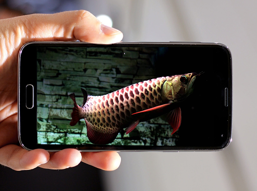 Dark Blue Arowana Fish