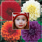 Dahlia Flowers Photo Frame