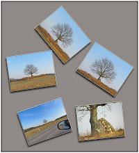 Photo: 24. februar 2011 - Træet og SX30