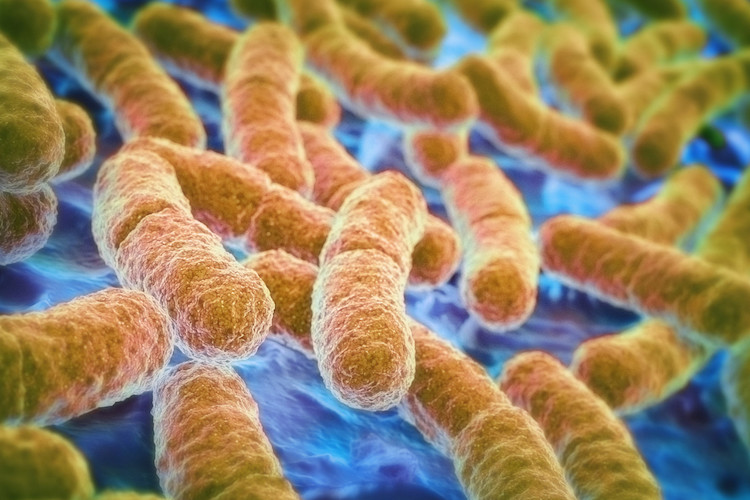 Neuroscience Shows How Gut Bacteria Impact Emotions
