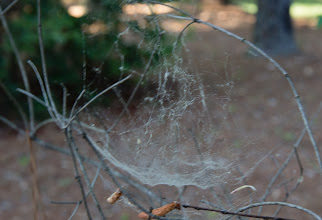 Photo: Day 103-Oh What A Wicked Web
