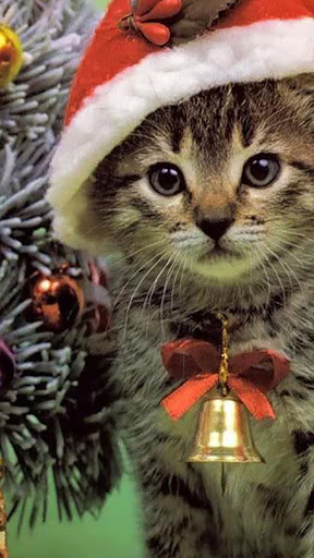 Cute Christmas cats.Wallpaper