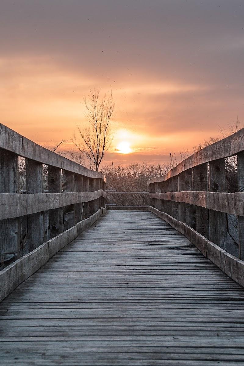 Il ponte verso il domani di cs