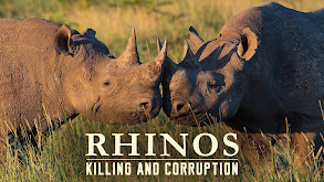 Rhinos: Killing And Corruption thumbnail