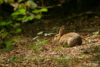 Photo: Wild Bunny - not for a cage or the pot!