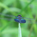Saphire Fluttler