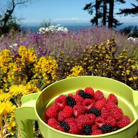 Raspberries by Gene Richardson - Instagram & Mobile Android (  )