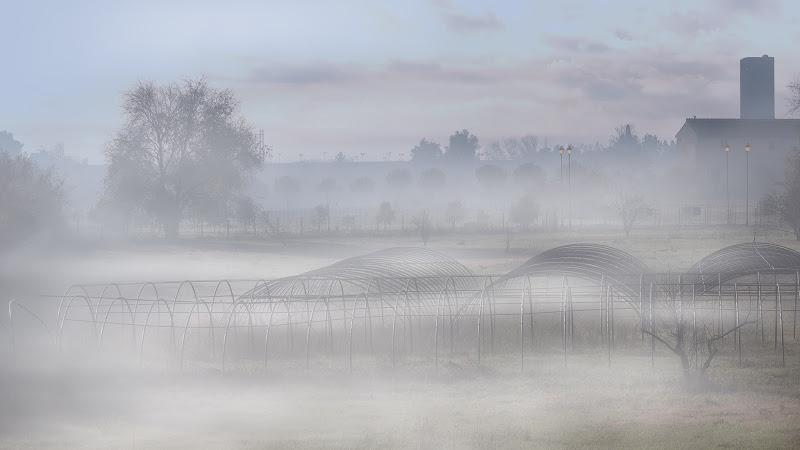 foschia nel parco di Tor Fiscale di germana_de_chellis