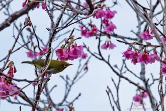 Photo: Sakura Surprise