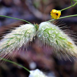 A pair by Gil Reis - Nature Up Close Other plants ( ~bio, macro, nature, plants, insects, life )