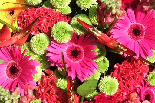 Cvjećare Budva, Nikšić, Kotor - Najveća cvjetna oaza u centru Budve