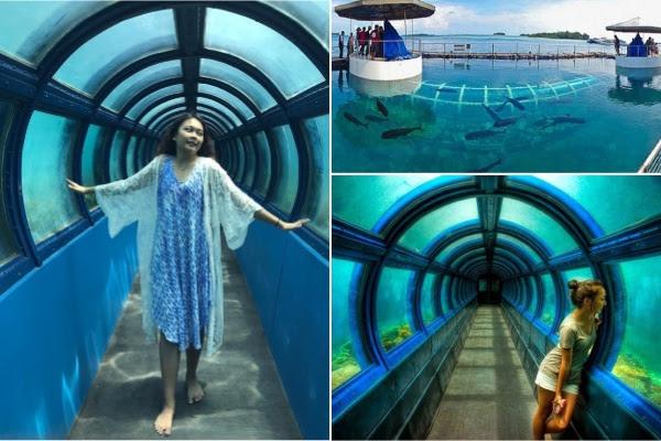 Aquarium Tunnel Pulau Putri