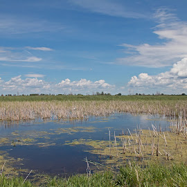 Tranquil Marsh by Bill Diller - Landscapes Waterscapes ( blue, michigan, nature, fish point wildlife refuge, calmness, tranquility, tranquil, wildlife refuge, marsh, summer )
