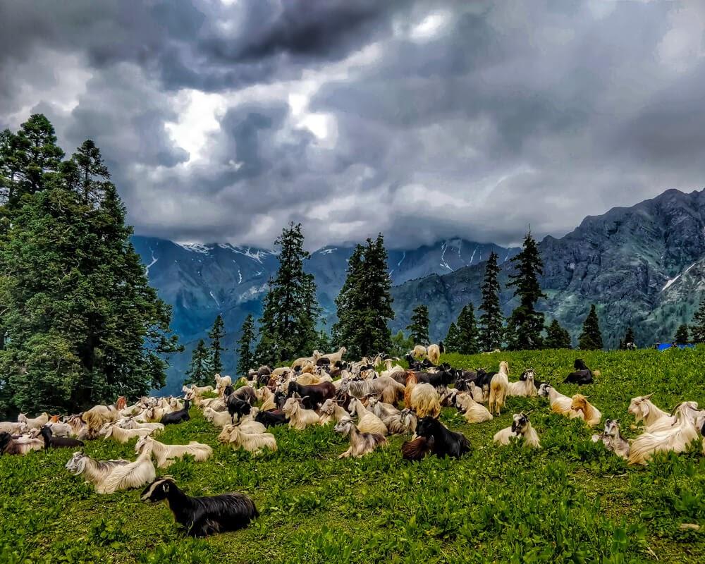 Kalga to Bunbuni Pass to Kheerganga – Offbeat in Parvati Valley