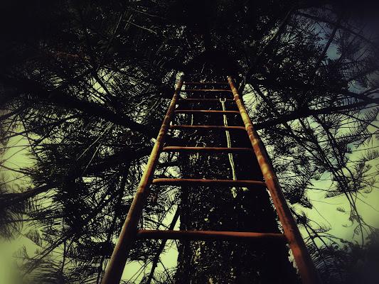 Aim to the top! (Punta in alto!) di Dof