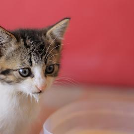 Reflectioning on Feeding by Rebekah Rubingh - Animals - Cats Kittens ( kitten, cat, feeding, pink, catfood )
