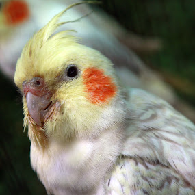 by Yunita Halim - Animals Birds