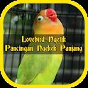 Lovebird Ngetik Pancingan Ngekek Panjang Offline icon