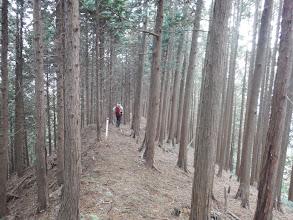 植林の歩きやすい道