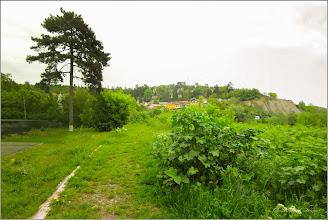 Photo: Iulişca (Fallopia japonica) planta invaziva - din Turda, Parcul Central - 2019.05.16