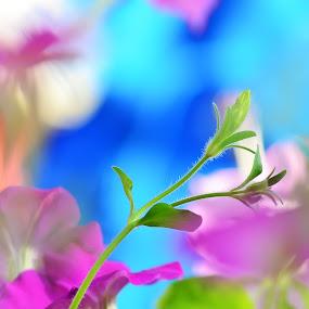 Up by Alina Dinu - Nature Up Close Flowers - 2011-2013 (  )